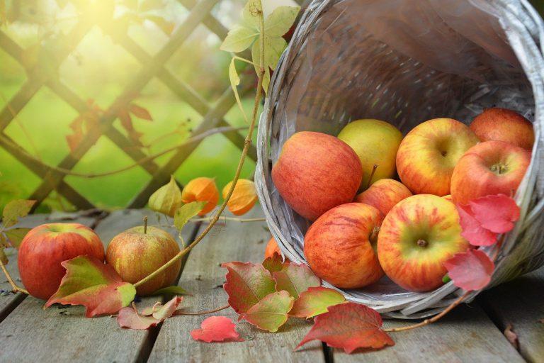 apples, leaves, fall